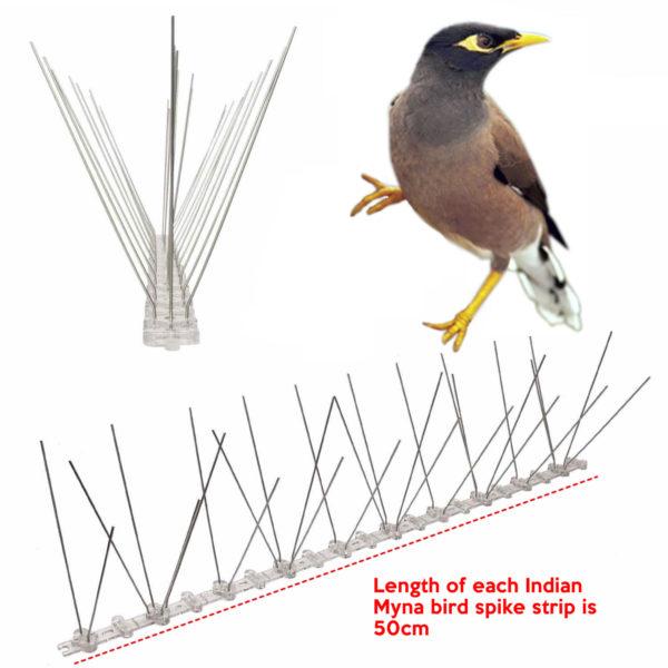 cheapest indian myna bird spike supplier online